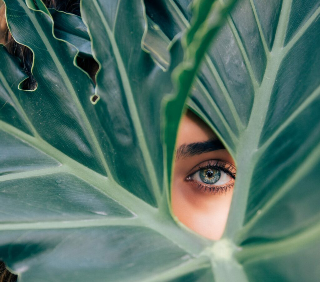 A woman's eye from behind the green fronds of a large plant.